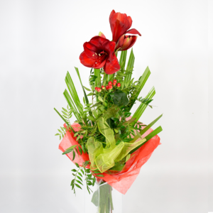 Červená kytica z amarylisu