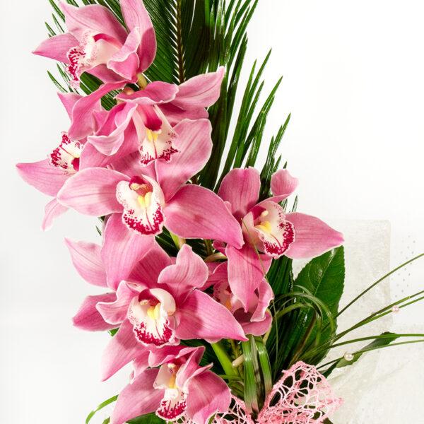 Ružová orchidea