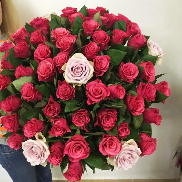 60 cyklamenových ruží