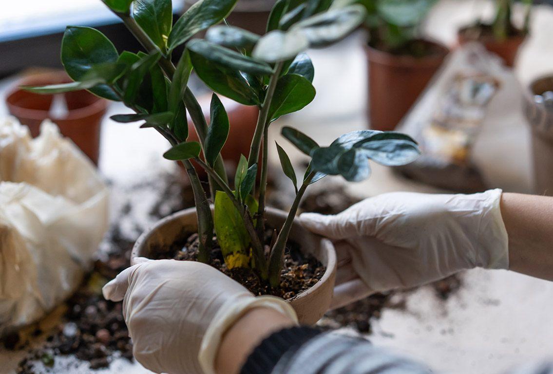 Ako sa starať o izbové rastliny ?